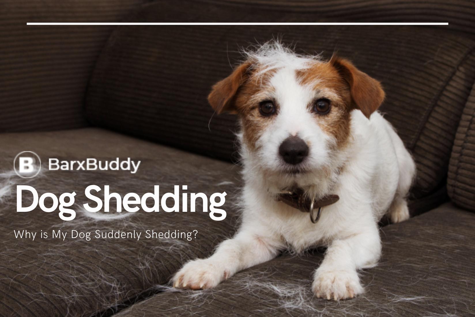 Dog Shedding Tips from BarxBuddy