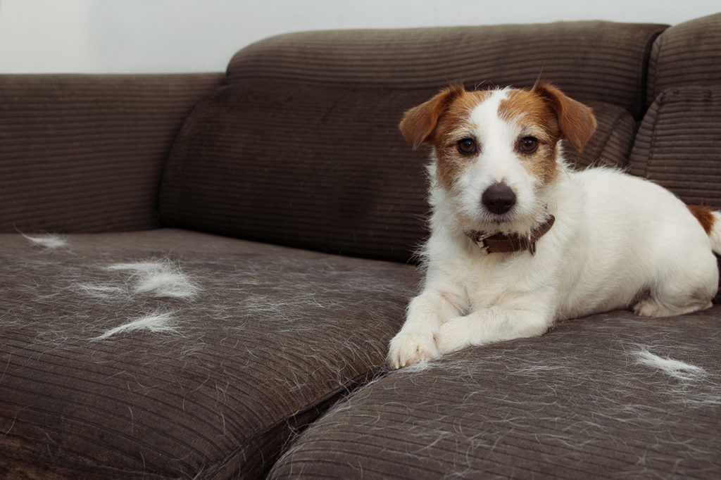 Why dogs shed